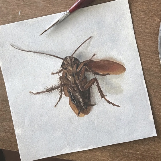 Cockroach painting, wing extended